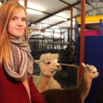 Students meet Alpacas at SRUC Elmwood